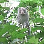 ロンボク島日記5